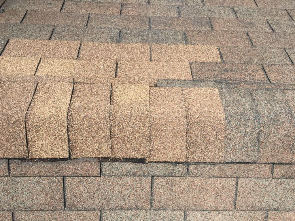 Curling Buckling Shingles Local Tampa Roofing Company