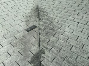 Mold on roof - Tampa Roofing Company